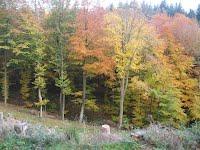 Tirsbæk storskov i flot efterårsdragt